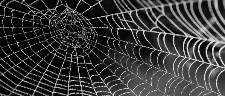 Dromen over spinnen, wat betekent dat?