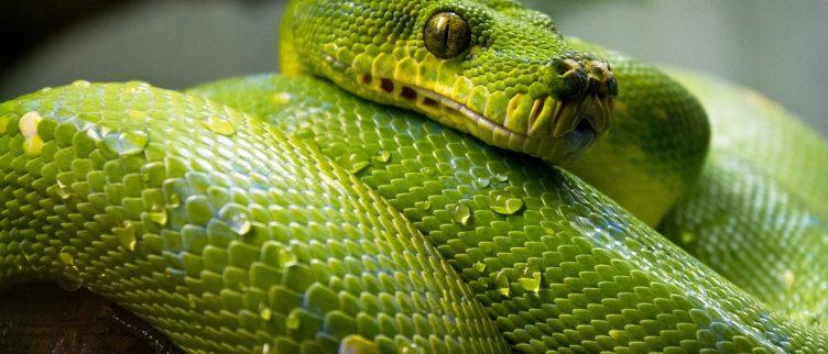 Dromen over Slangen, wat betekent dat?