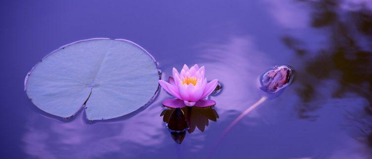 Alles over de sjamaan en het sjamanisme