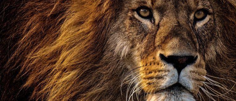 Horoscoop sterrenbeeld Leeuw: karakter, carrière & liefde