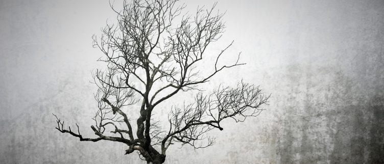 De Keltische boomhoroscoop, wat is het en wat zegt het over je?