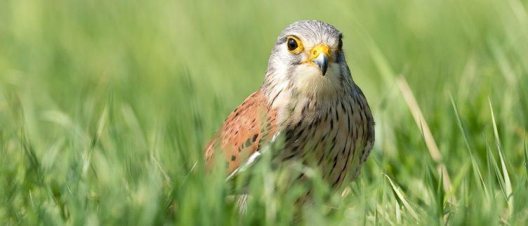 Spirituele betekenis van vogels & veren + vogelhoroscoop