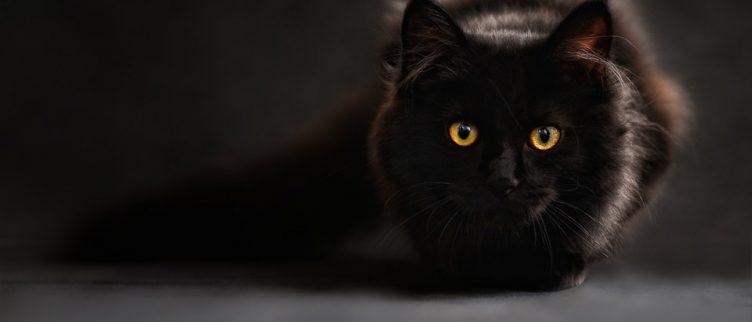 Dromen over katten, wat betekent dat?