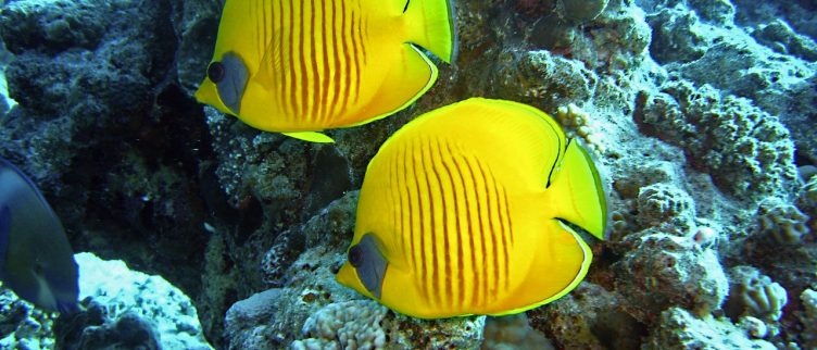 Dromen over Vissen, wat betekent dat?