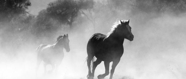 Paard 🐴; Chinese Dierenriem Horoscoop